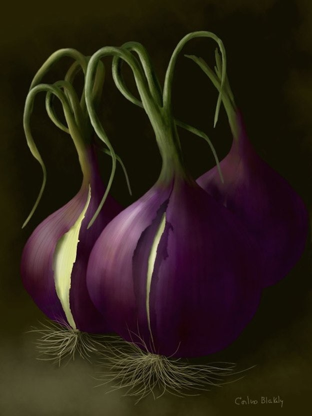Onions from the Garden, © 2012 Corliss Blakely