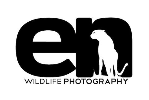 Création de logo sur 99designs