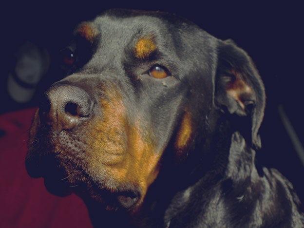 dog-final