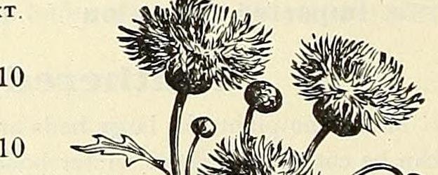 free flowers 10