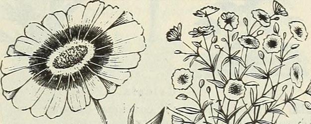 free flowers 2