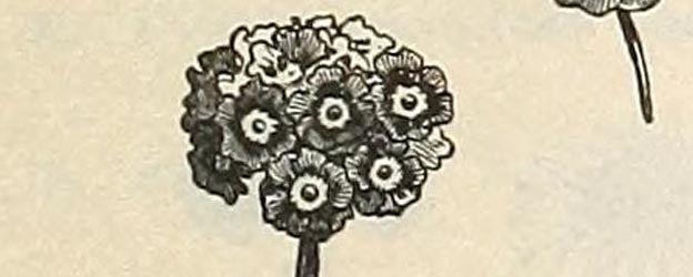 free flowers 7