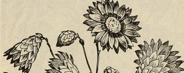 free flowers 8