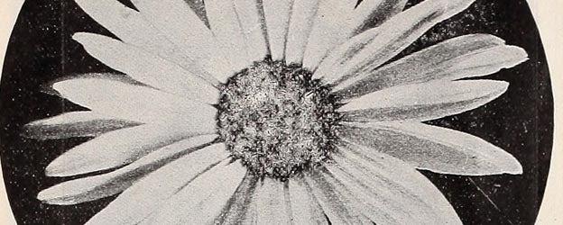 free flowers 9