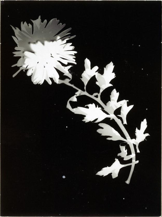 flower-ca-1925-27