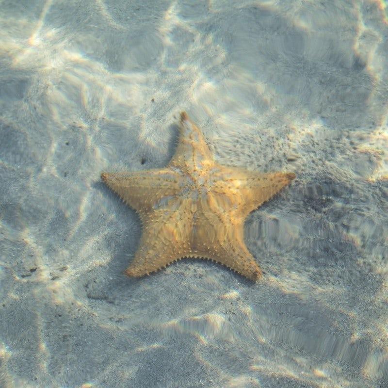 Photographie sous l'eau
