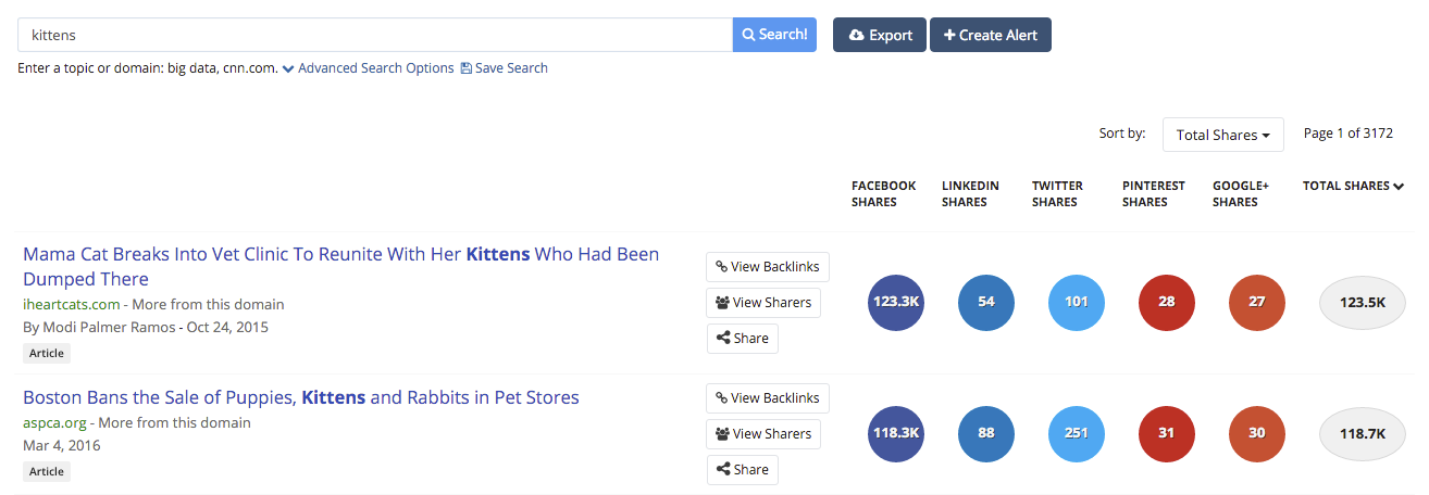 buzzsumo results for kittens