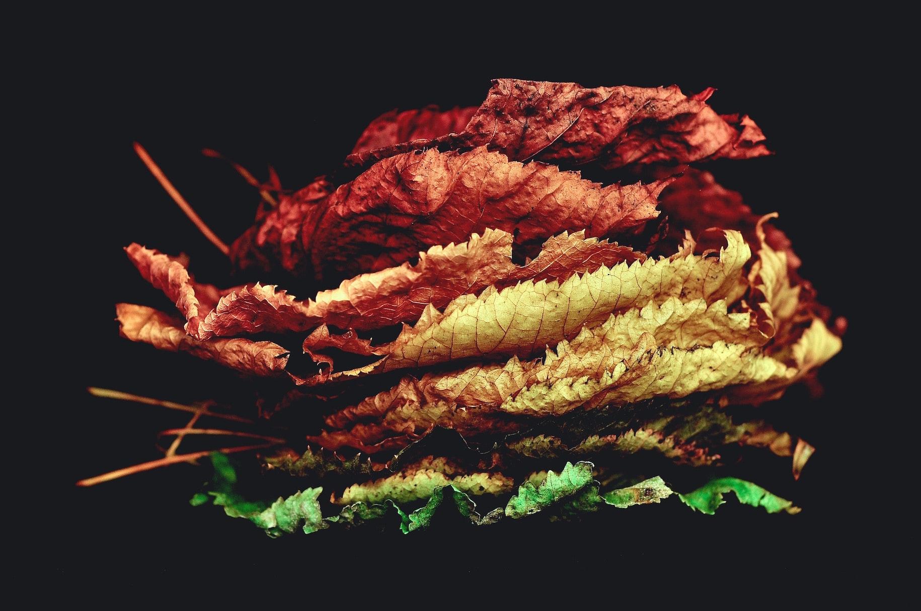 time of season autumn fall leaves