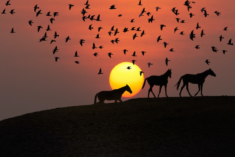 red sun horses mustang birds silhouette