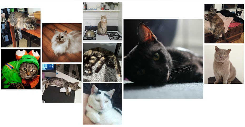 The cats of 99designs