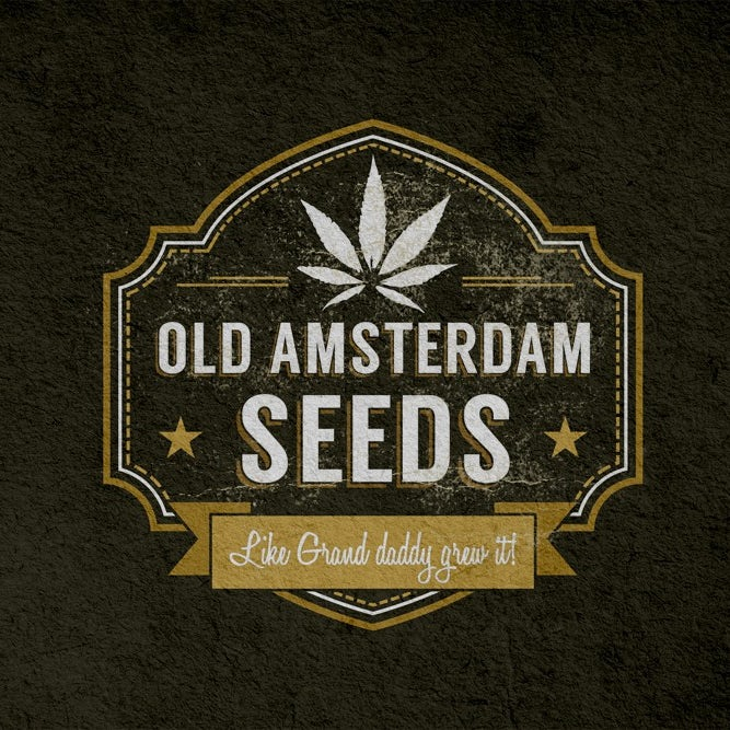 old amsterdam seeds logo