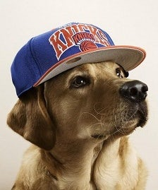 Dog in baseball cap