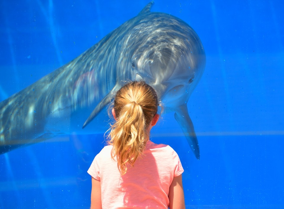 Girl and dolphin staring at each other