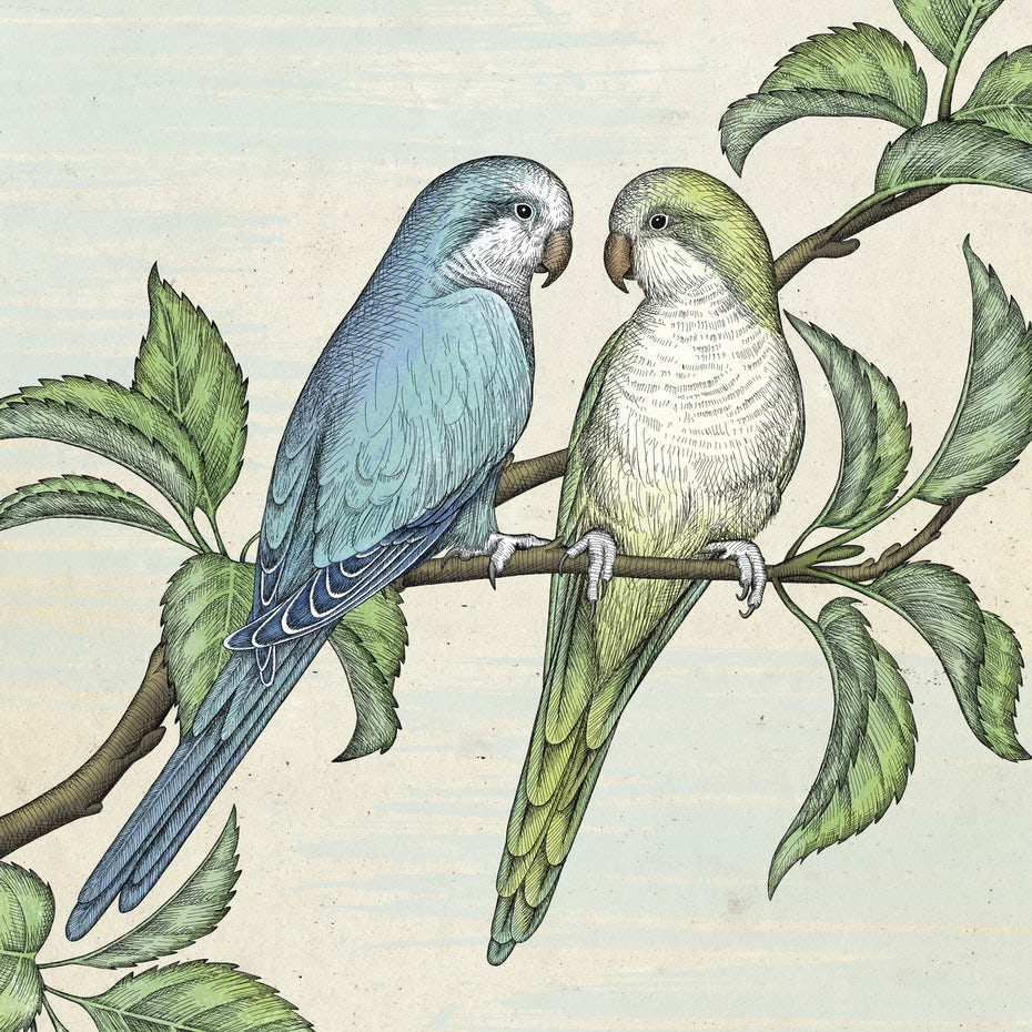 drawing of two parrots