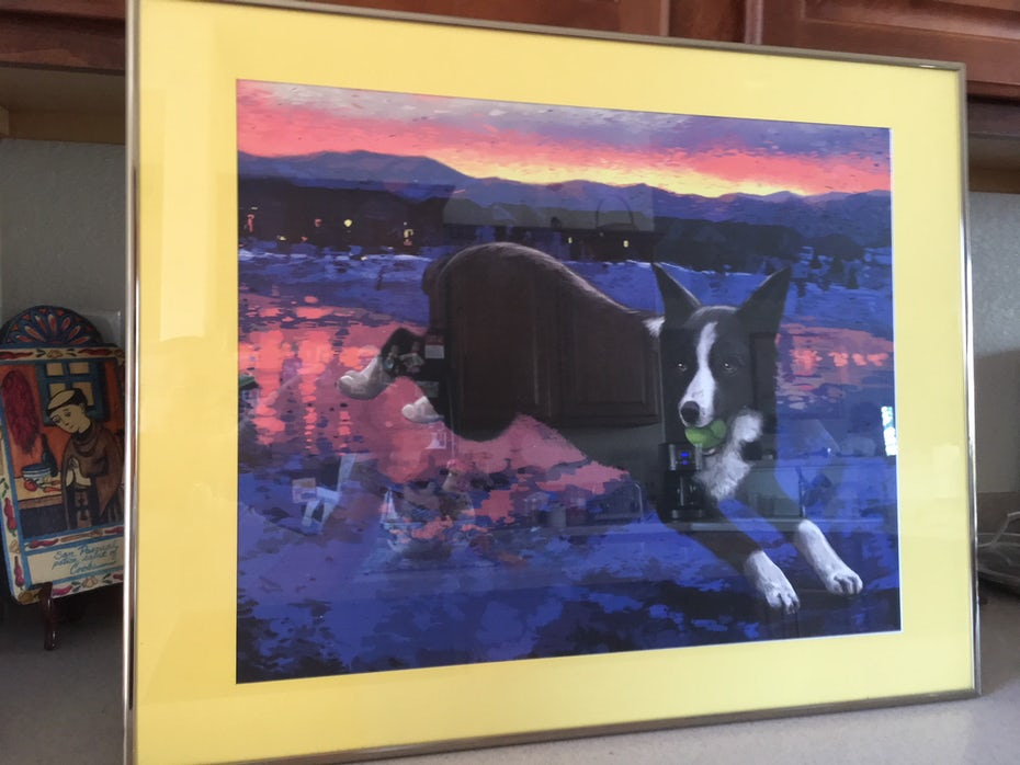 portrait of border collie with mountains
