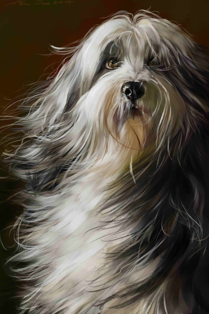 dog with long hair portrait