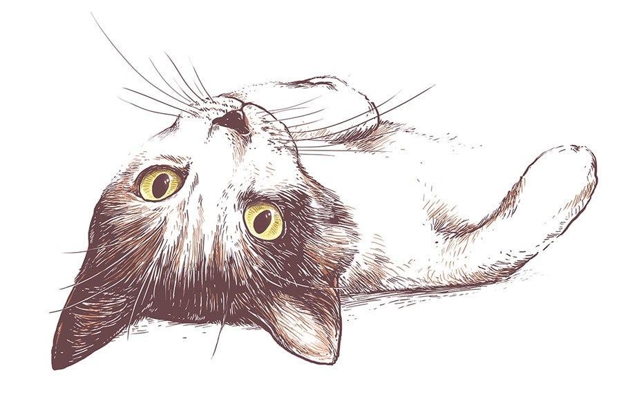 Curious cat illustration