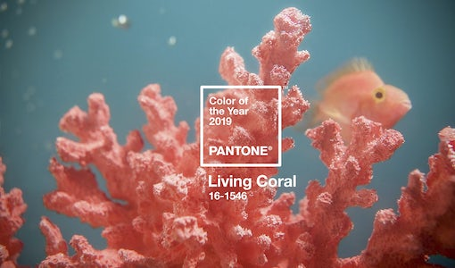 And the 2019 Pantone Color of the Year is…