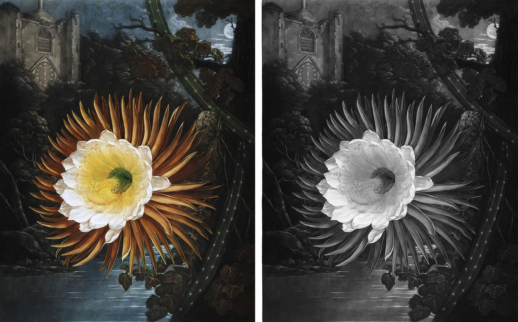 A side by side comparison of an illustration and its grayscale form