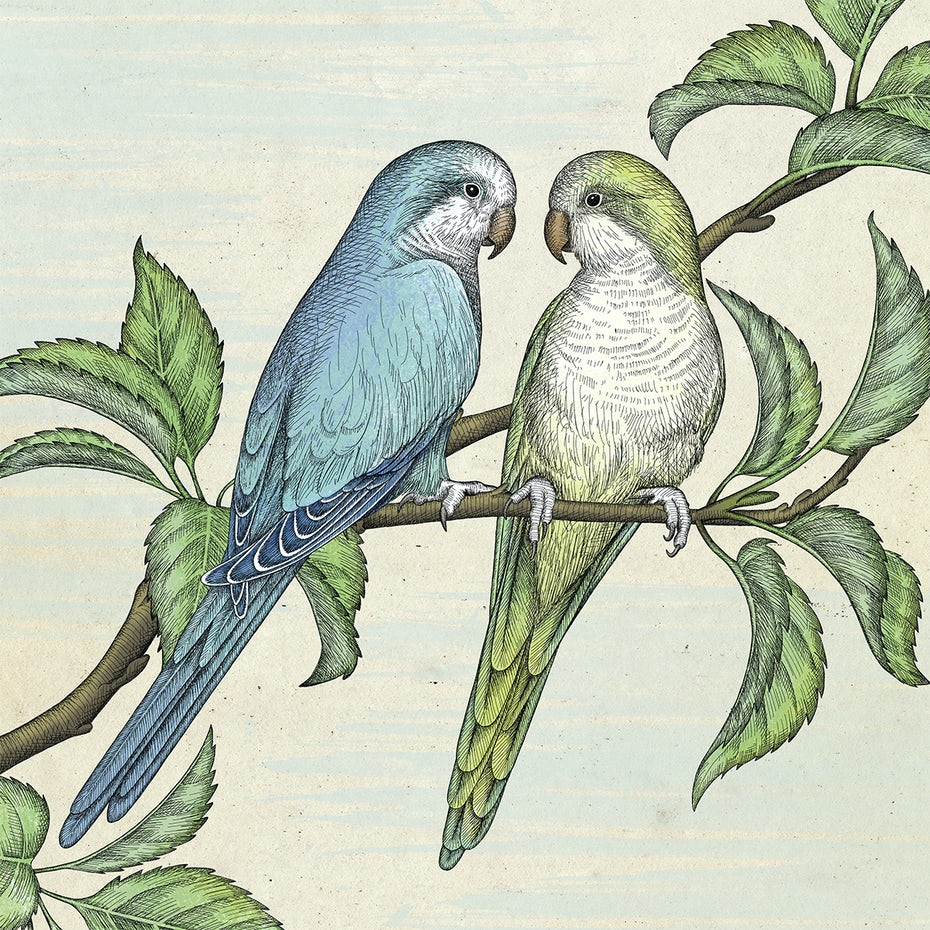 illustration of two parrots