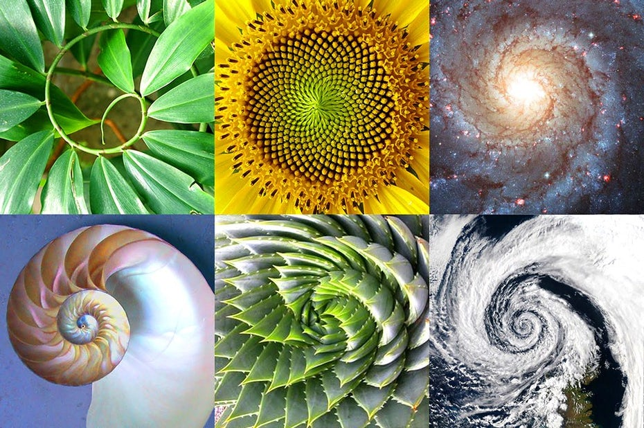 The Golden Ratio and how to use it in graphic design - 99designs