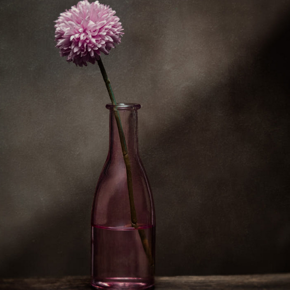 Pink flower in pink vase with dark background