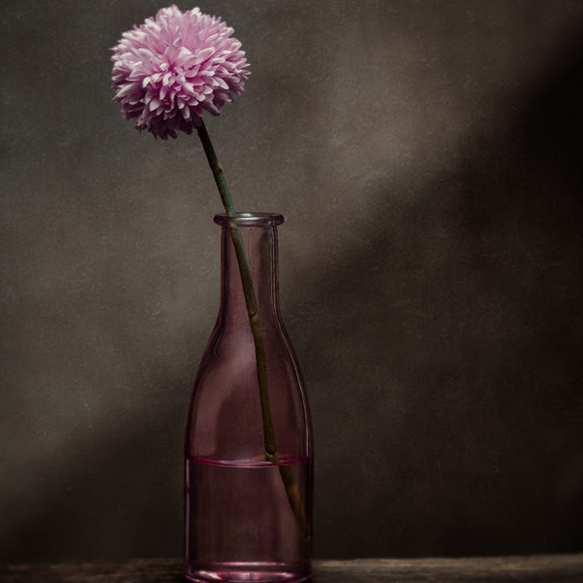Pink flower in pink vase with dark background