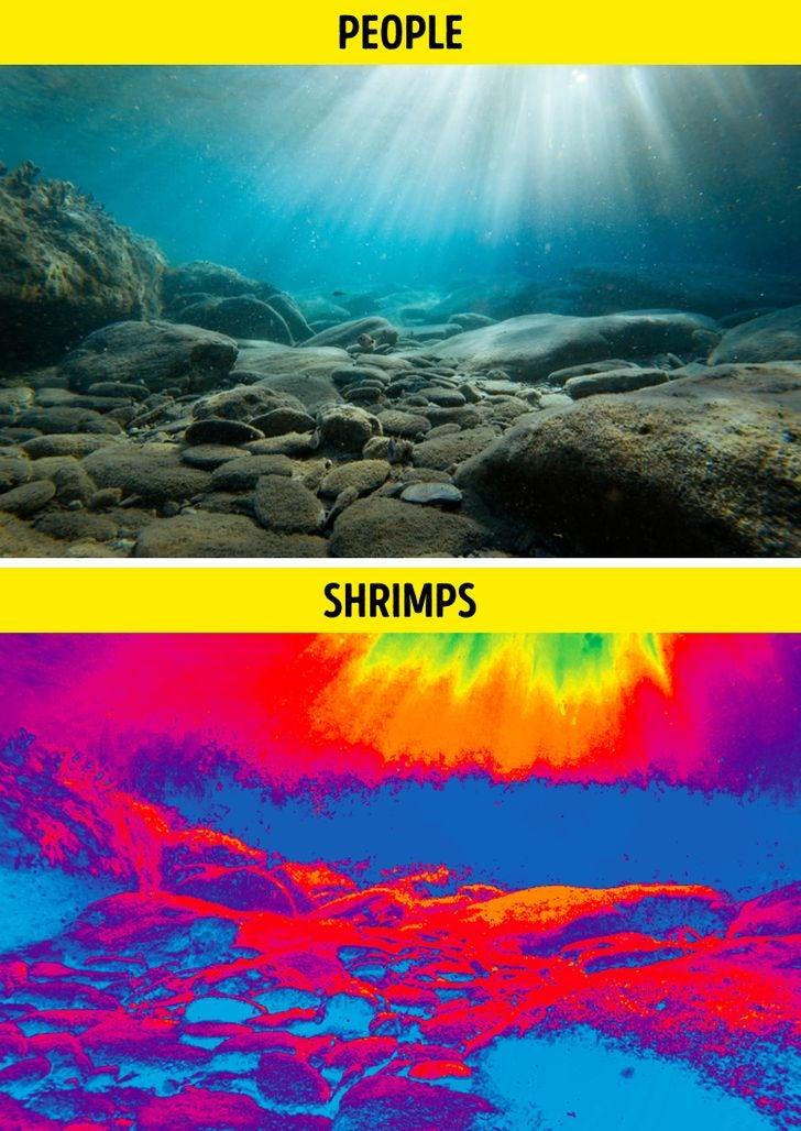 Le point de vue d'un humain par rapport à celui d'une crevette-mante