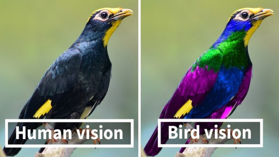 side by side of a bird's point of view versus a human's