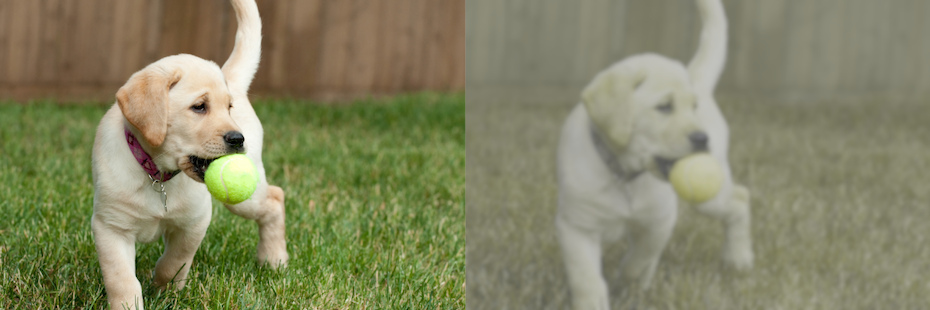 side by side visual of a dog's point of view vs a human's looking at a puppy with a ball