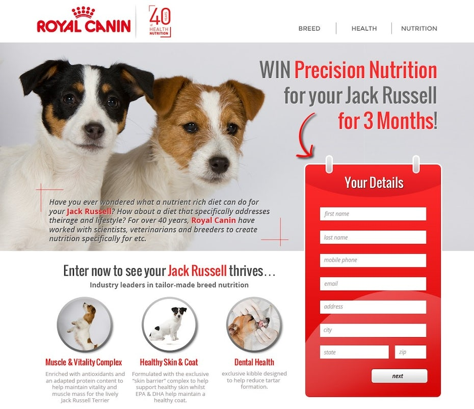 white and red website featuring two jack russell terriers