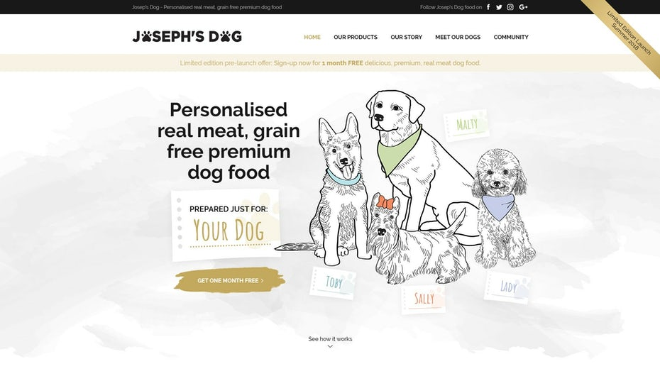 illustration style website design with dogs and dog food