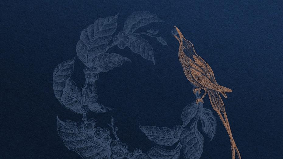 an illustration of a golden bird eating a bean off a coffee tree branch