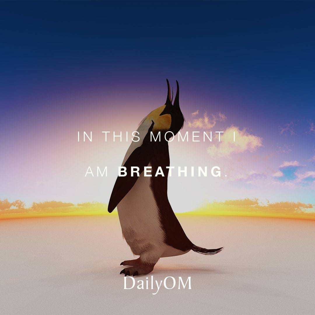 Penguin breathing